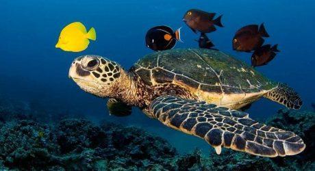 turtle_14